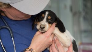 animal-rescue-